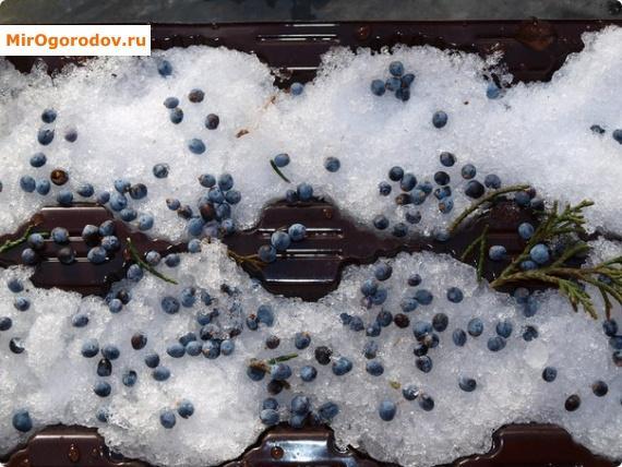 Зимние хлопоты или как проводить стратификацию семян изоражения