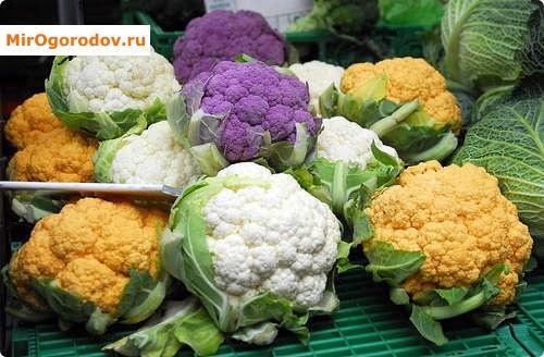 Изображение - Как вырастить цветную капусту на продажу prev_b629ed