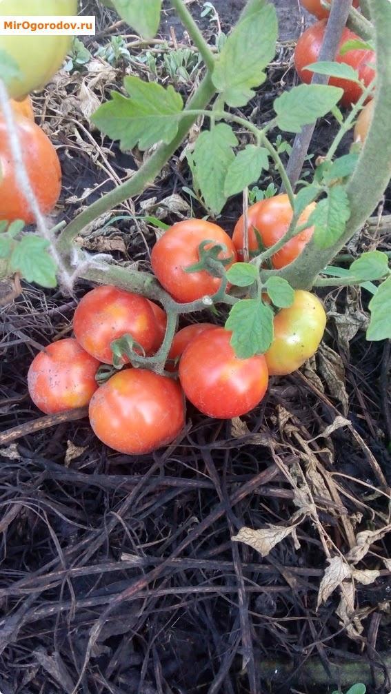Соблюдая нехитрые правила можно получить отличный урожай