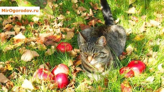 Уход за яблоней в Подмосковье