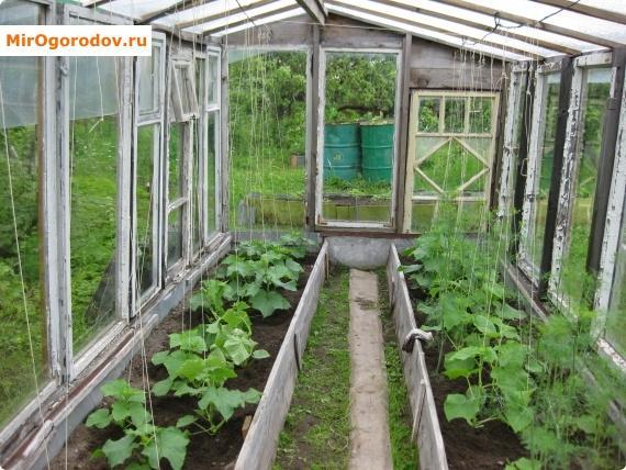 подвязка растения