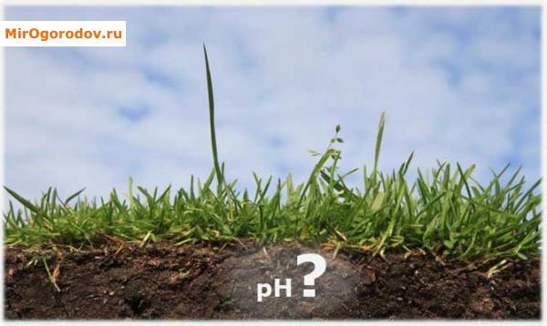 Какова кислотность почвы?