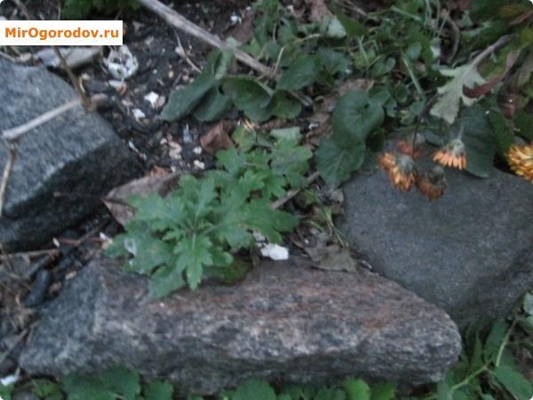 Простое использование камней