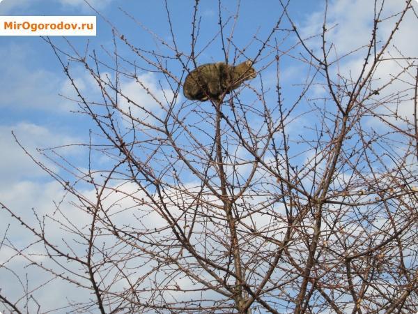 кот на дереве!