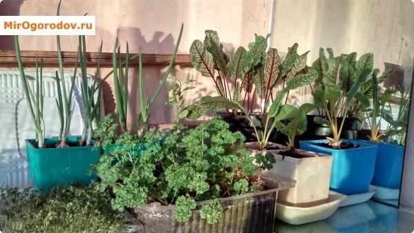 Растения нас радуют даже зимой!