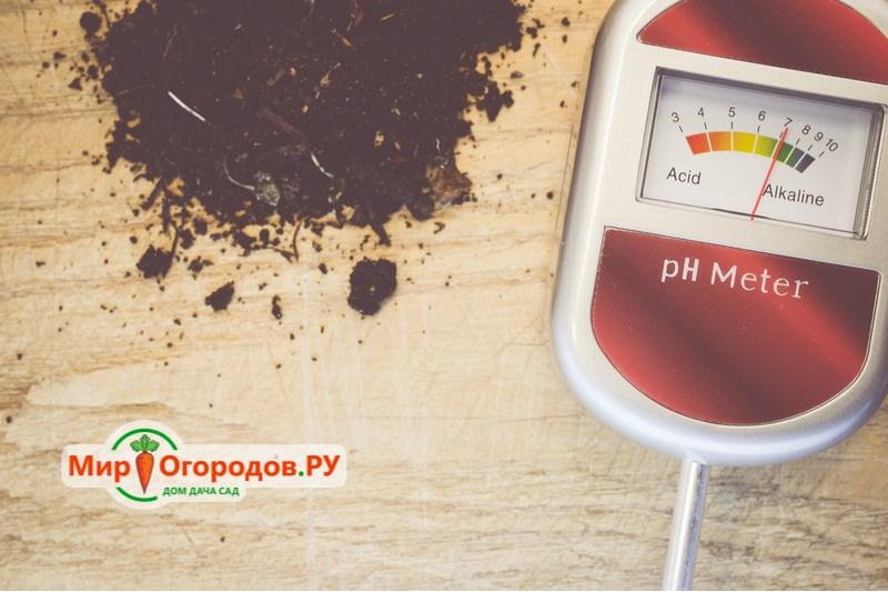 измеряем кислотность почвы
