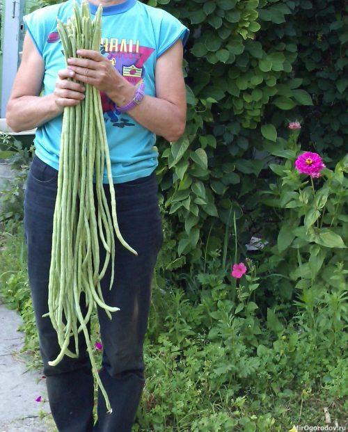 Пришла пора сбора урожая