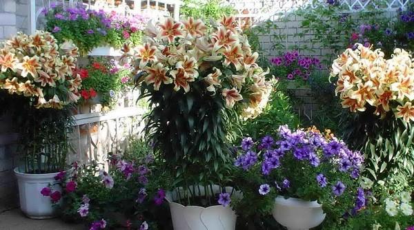 Высокорослое растение
