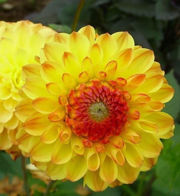Солнышко в вашем саду