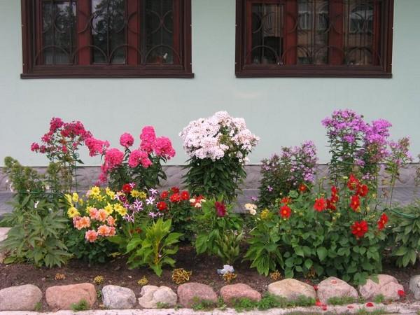 Цветы под окном