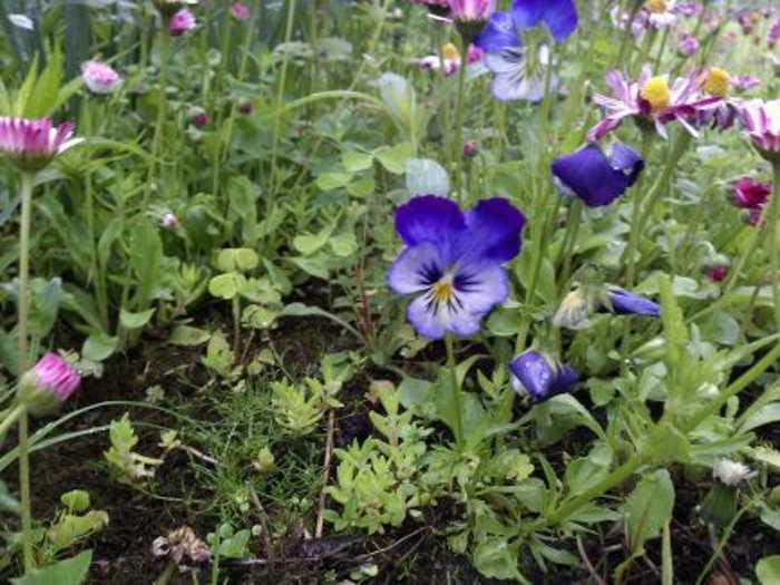 голубая расцветка