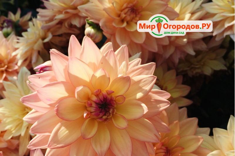 Melody Dora