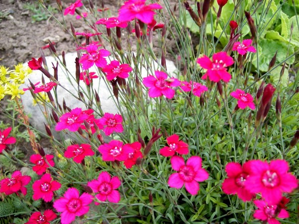 Яркие цветы