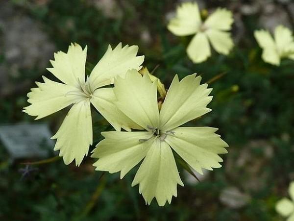 Неброские цветы