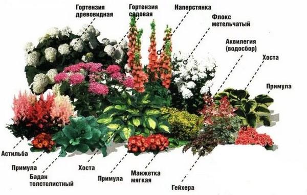 Цветы для оформления клумбы