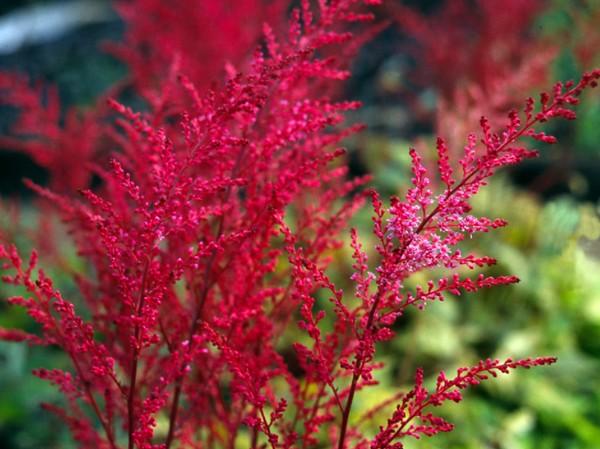 Растение насыщенного окраса