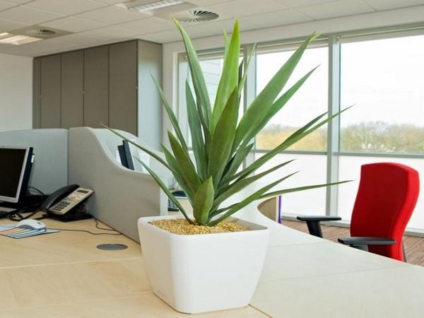 Ложная пальма в офисе