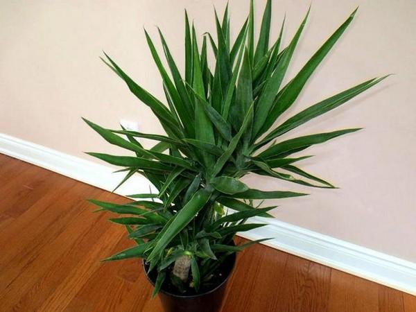 Миниатюрная псевдо-пальма