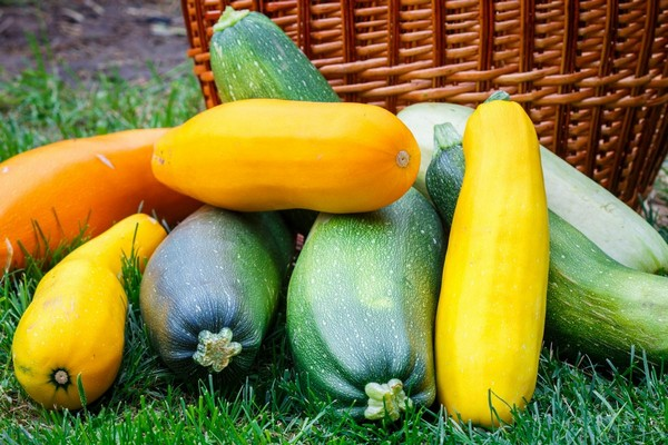 Желтые и зеленые кабачки