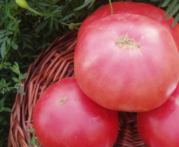 Крупные розовые томаты
