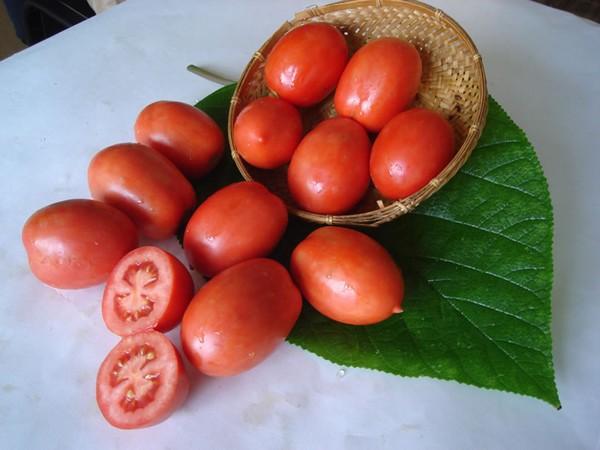Спелые помидоры Челнок