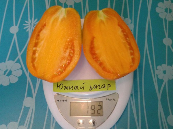 Крупный желтый томат