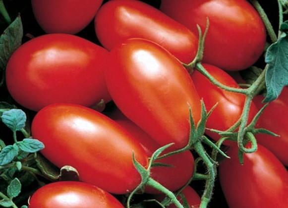 Удлиненные томаты